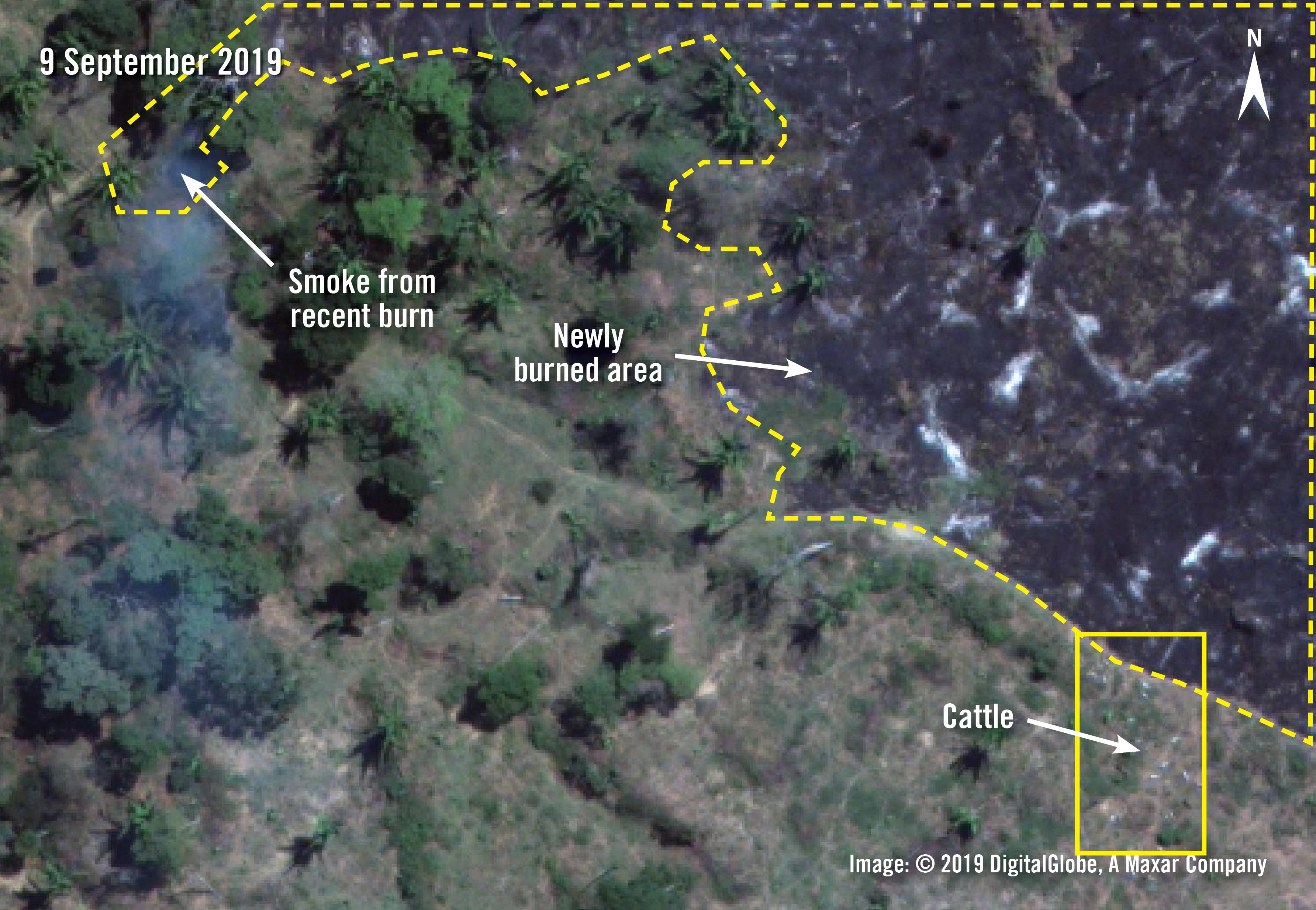 267346 illegale-Viehzucht-Brasilien-Amazonas-Satellitenbild  | © National Aeronautics and Space Administration (NASA)/Amnesty International